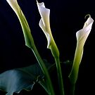 Lillies by Mary Broome