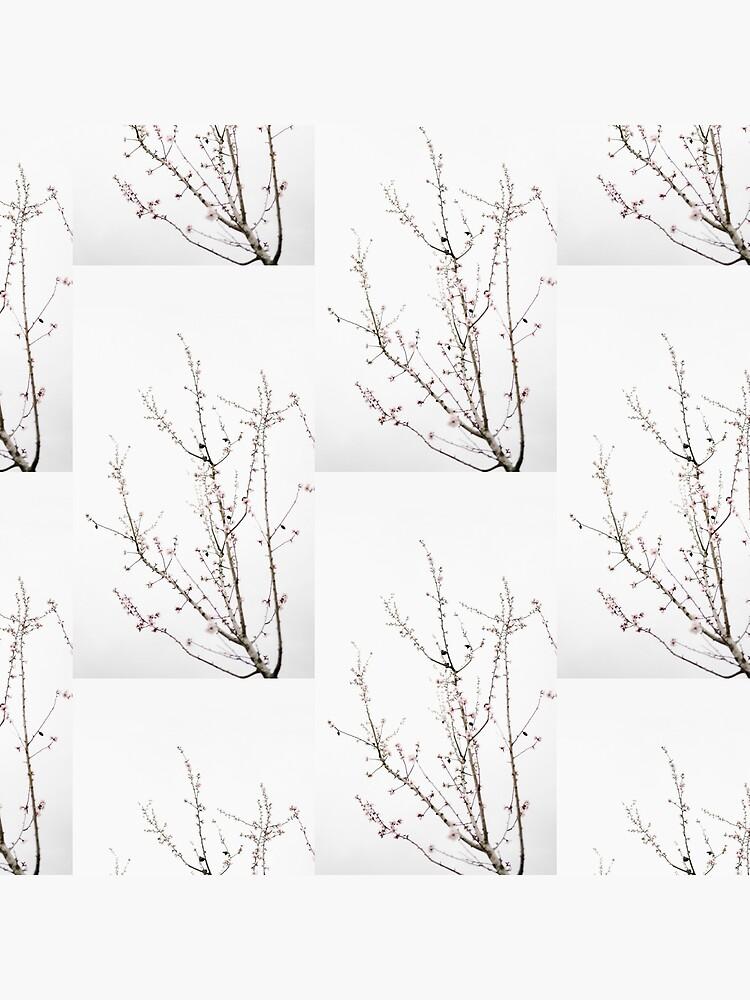 Mandelbaum Pflanze minimalistisch von tumblrimagies