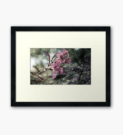 Taken Framed Print