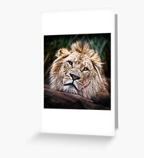 Depressed Young Lion Greeting Card