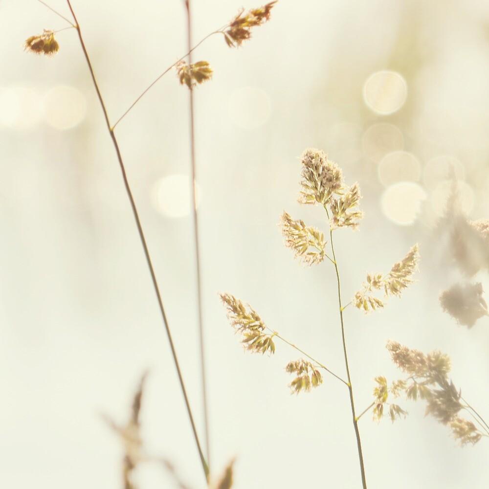 Grass and Bokeh by mariakallin