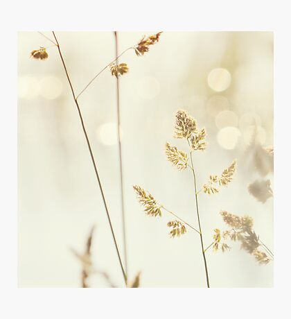 Grass and Bokeh Photographic Print