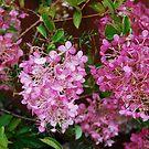 Pink Hydrangeas in the rain by Marjorie Wallace