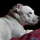 Millie on the bed in the sun by LisaRoberts