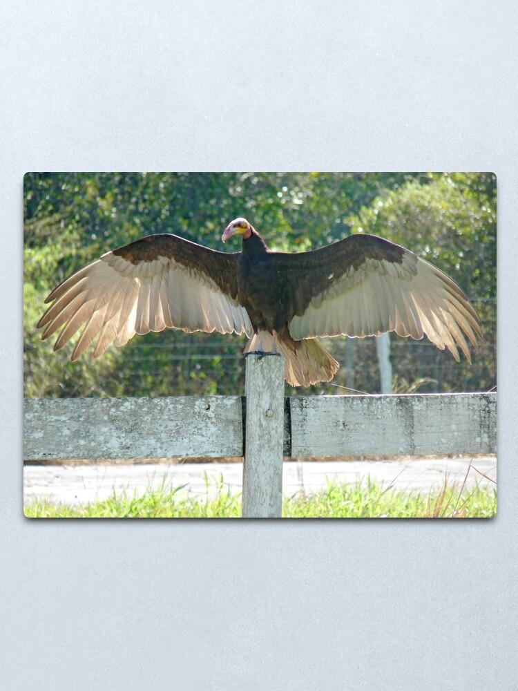Alternate view of Vulture wingspan Metal Print