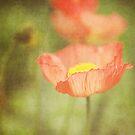 the all-powerful poppy by sleepyjeanne