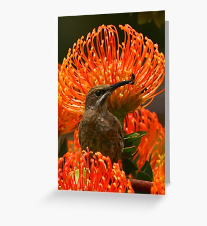 Cape Sugarbird or Bee-eater? Greeting Card