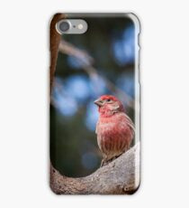 House Finch iPhone Case/Skin