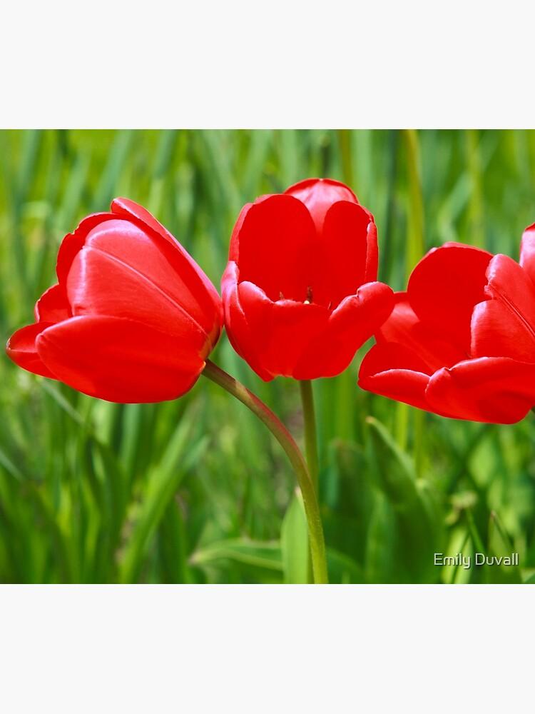 Three Tulips by PeaceAndBeauty