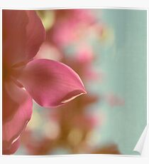 Magnolia Magnificence Poster