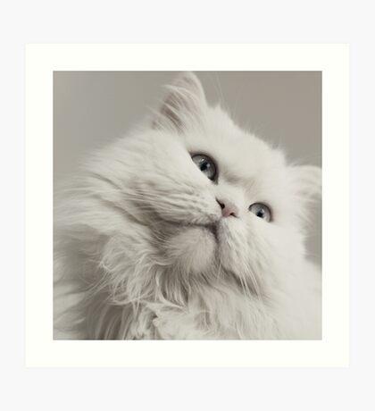 A cat beauty Art Print