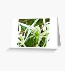 Itsy Bitsy Spider Greeting Card