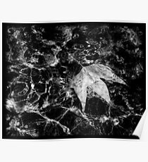 Water Leaf Poster