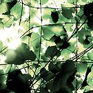 Unsaturated Vine by outsider