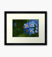 Raindrops on forget-me-nots Framed Print