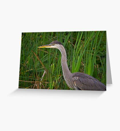 Blue heron profile Greeting Card