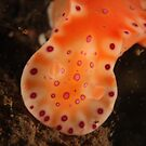 Orange Nudi by Jamie Kiddle