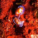 Pair Of Nudi's by Jamie Kiddle