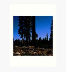 Near Laurel Lake in Yosemite N.P. (7/3/2010) Art Print