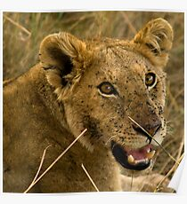Masai Mara, Kenya. 2009 Poster