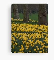 a field of yellow Canvas Print