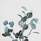 Eukalyptus, Pflanze, Blatt, Moderne Kunst, Wandkunst, Druck, Minimalistisch, Modern von juliaemelian