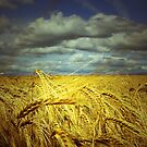 THE GOLDEN FIELD  by leonie7