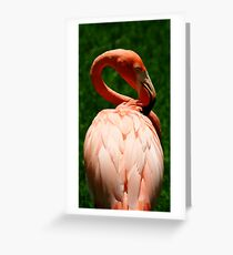 Flamingo at Jungle Gardens X Greeting Card
