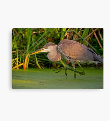 Getting a leg up on the competition Canvas Print