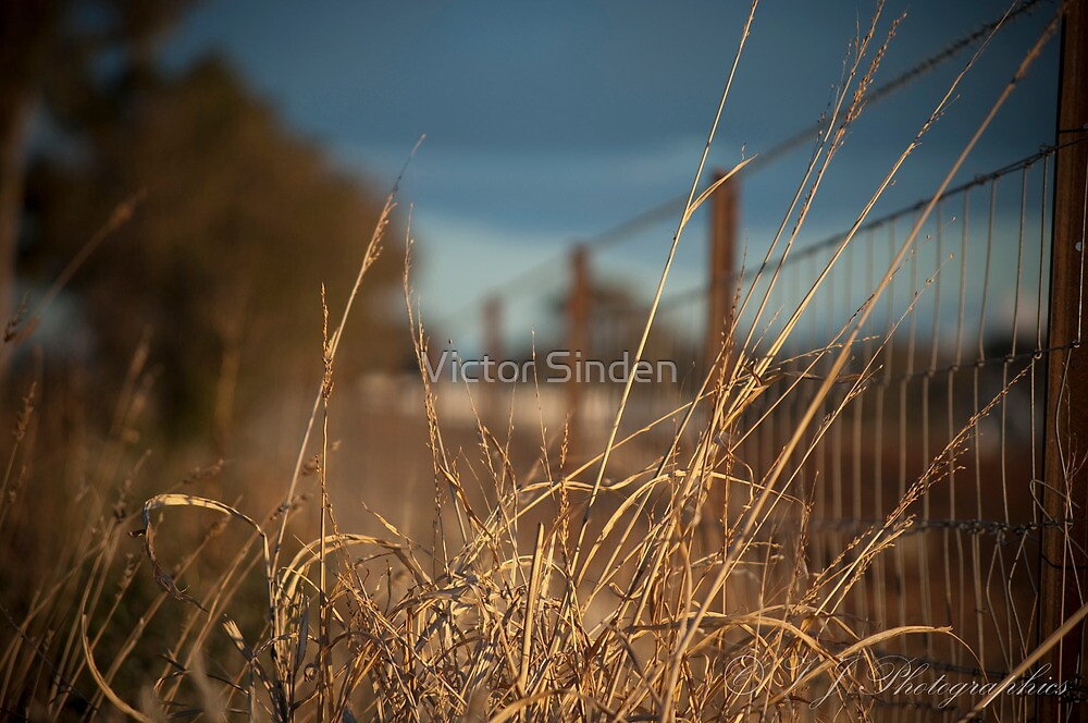 Grass infront of wire fence by Victor Sinden
