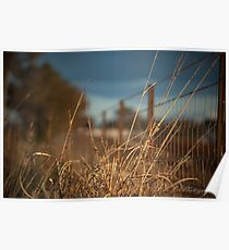 Grass infront of wire fence Poster