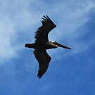 Let your dreams grow wings and soar by Earl McCall