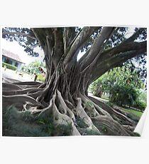 Centenary Tree... 2 Poster