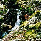 Rainforest stream in Central Tasmania by keleeson