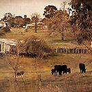 Rural Scene by pennyswork