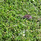 Where's that four-leafed clover? by Carol Dumousseau