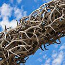 Elk Horn Arch by Justin Baer