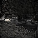 The Dark Woods at Dawn by utilityimage