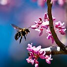 Bee at Magnolia Plantation, SC by TJ Baccari Photography