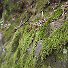 Moss Rock - Wakehurst Place by Emma Smith