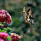 Fly By by Ann J. Sagel