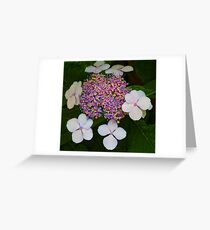 Old Fashioned Greeting Card