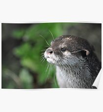 Oriental Small Clawed Otter - Shepreth Wildlife Park 2010 Poster