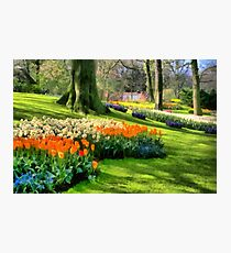 Beds of Flowers Photographic Print