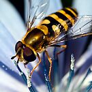 Hover Fly by Smaxi
