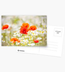 Poppy in the Field of Daisies Postcards