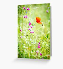 Poppies and Sweet Peas Greeting Card