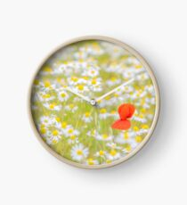 Field of Daisies and the Lonely Poppy Clock