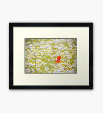 Field of Daisies and the Lonely Poppy Framed Print