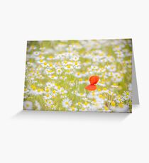 Field of Daisies and the Lonely Poppy Greeting Card